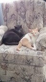 Cats in a chair