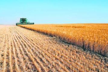 Reuters - Romania asteapta o recolta buna de grau in acest an