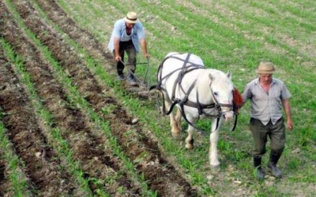 Aproximativ 700.000 cereri pentru suprafata agricola