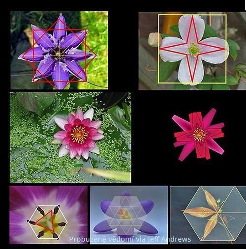 Geometrie květin