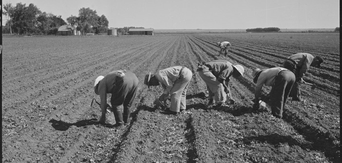 'I lie to them': Food History as Labor History in the Classroom