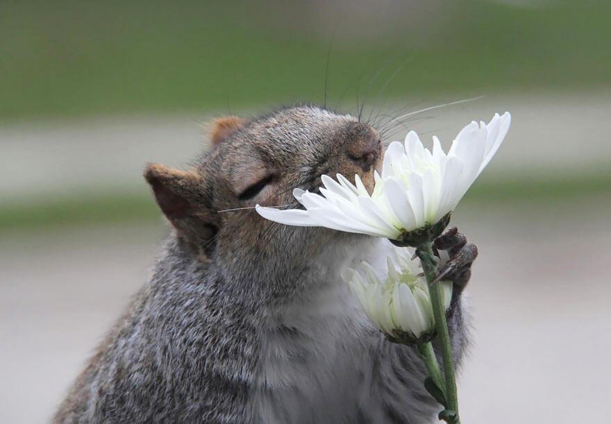 zvirata-privonujici-ke-kvetinam-4