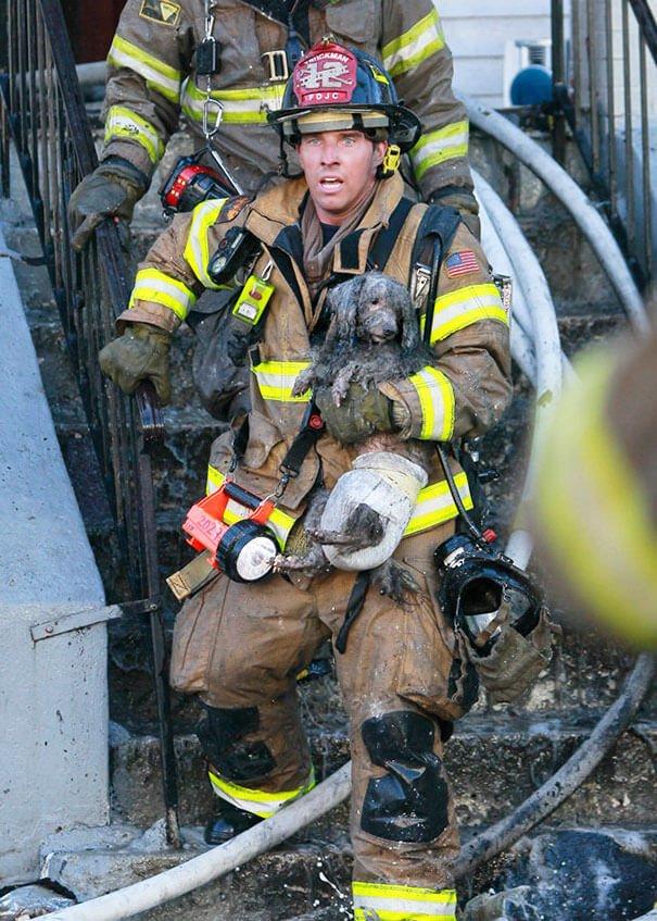 hasici-zachrana-zvirat-3
