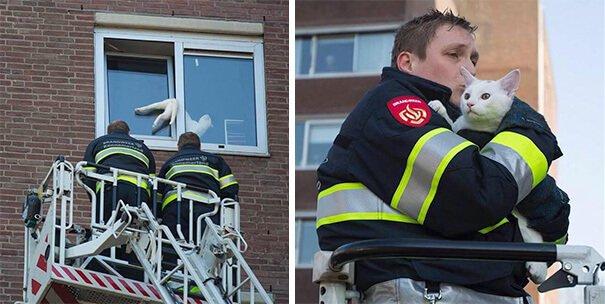 hasici-zachrana-zvirat-8