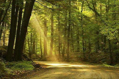 trendy v pohřbívání: vzpomínkový les