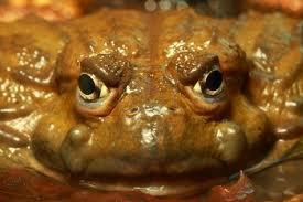Inthefacefrog