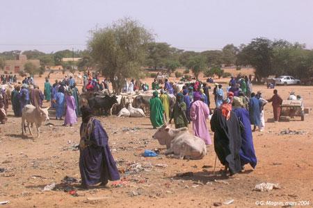 Sénégal-Le commerce de bétail sur pied-Les circuits nationaux de commercialisation-Téfankés, dioulas et acheteurs au marché de Thillé Boubacar