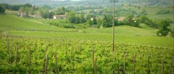 2015-04-07 20_19_08-Video Rai.TV - Signori del vino - Signori del vino del 21_03_2015 - Veneto
