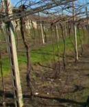 2015-04-07 20_40_51-Video Rai.TV - Signori del vino - Signori del vino del 21_03_2015 - Veneto