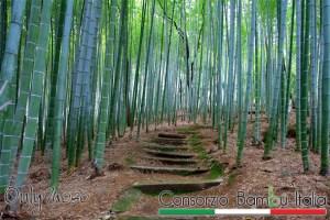 consorzio bambu