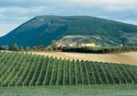 Uve biologiche Conero e Castelli di Jesi: certificati 175 ettari Moncaro