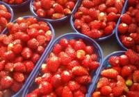 Fragole e fragoline di Maletto