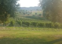 Feste del Verdicchio: sagra dell'uva di Cupramontana