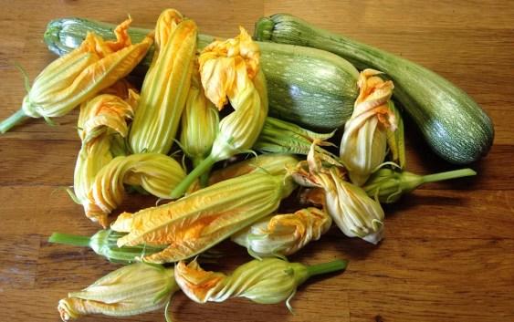 fiori di zucca - ricette
