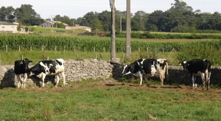 Italia obligará desde el 19 abril a etiquetar el origen de la leche y los quesos