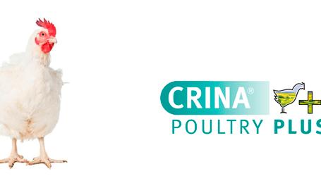 DSM obtiene la autorización de CRINA® Poultry Plus como aditivo zootécnico en la Unión Europea