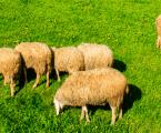 Boehringer Ingelheim presenta Eprinex Multi a los ganaderos de la Cooperativa Nuestra Señora de los Remedios