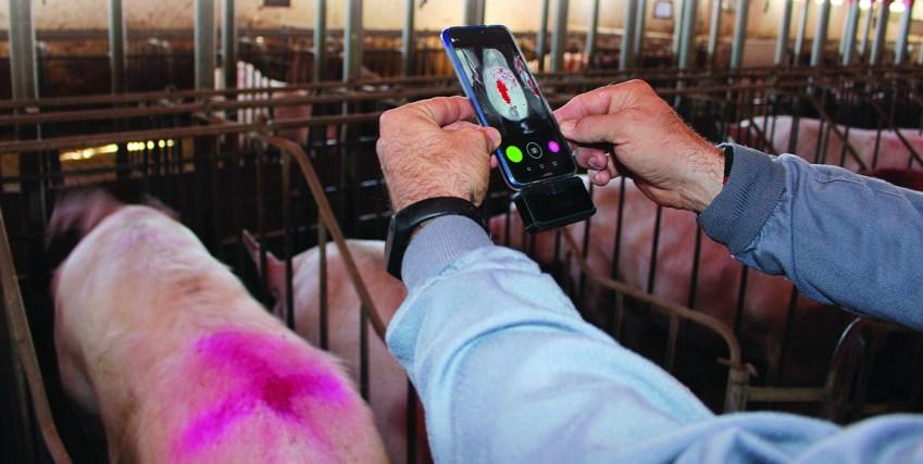 Degree2act.app, termografía al servicio de los veterinarios y productores de porcino