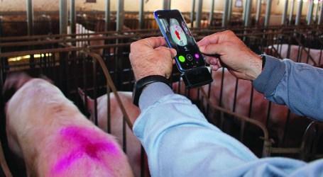 Degree2act.app, termografía al servicio  de los veterinarios y productores de porcino.