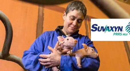 Más de 8 millones* de cerdos protegidos con Suvaxyn® PRRS MLV