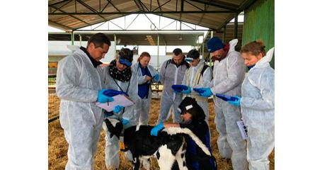 MSD Animal Health imparte un curso de ecografía pulmonar a técnicos europeos