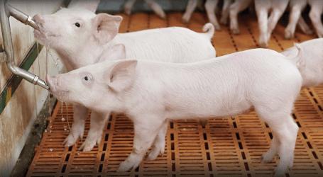 Nueva edición de Producción Animal ya disponible online