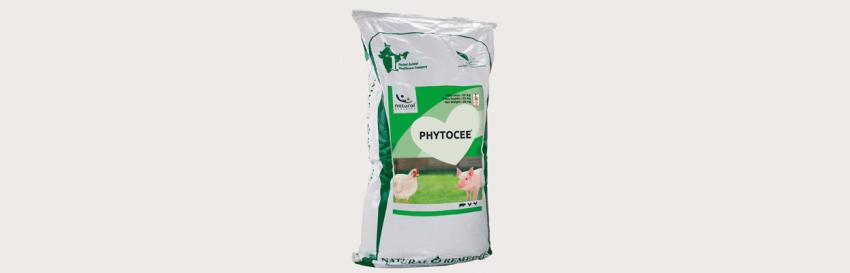 PHYTOCEE-maymo