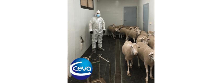 protocolo-preventivo-de-Ceva-Salud-Animal