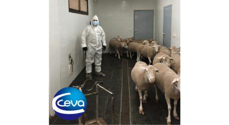 El protocolo preventivo de Ceva Salud Animal para asegurar la salud de sus trabajadores y clientes en su día a día