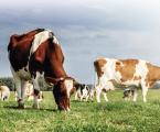 Parásitos: Uno de los grandes retos de la producción animal