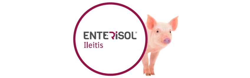 enterisol-ileitis-boehringer