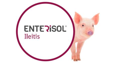 Enterisol® Ileitis recibe la autorización para incluir entre sus propiedades la reducción de Salmonella