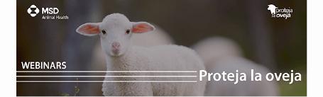 """""""Nunca bajes la guardia frente a los coccidios"""", no te pierdas el webinar de MSD Animal Health el martes 19 de octubre"""