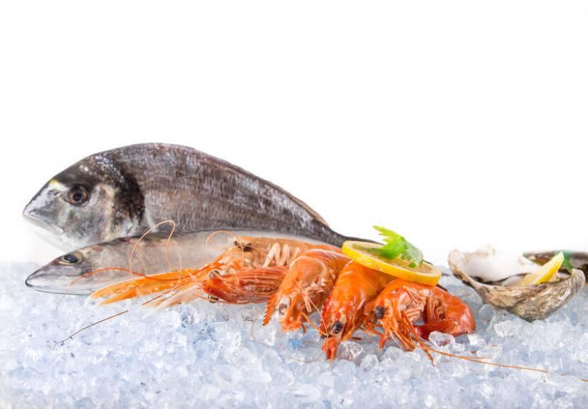 frisch halten von fisch