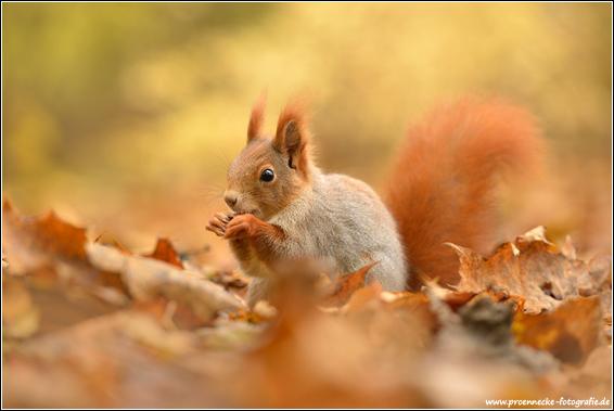 Naturfotografie Kevin Prnnecke
