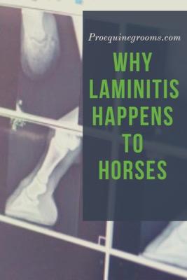 Pro Equine Grooms - Why Laminitis Happens In Horses
