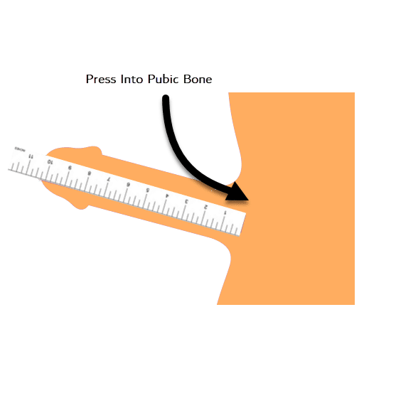 measure penis length size