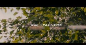 Once A Tree, JUNOS