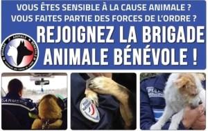 Brigade Animale Bénévole : Ils luttent contre la maltraitance animale et ont besoin d'aide