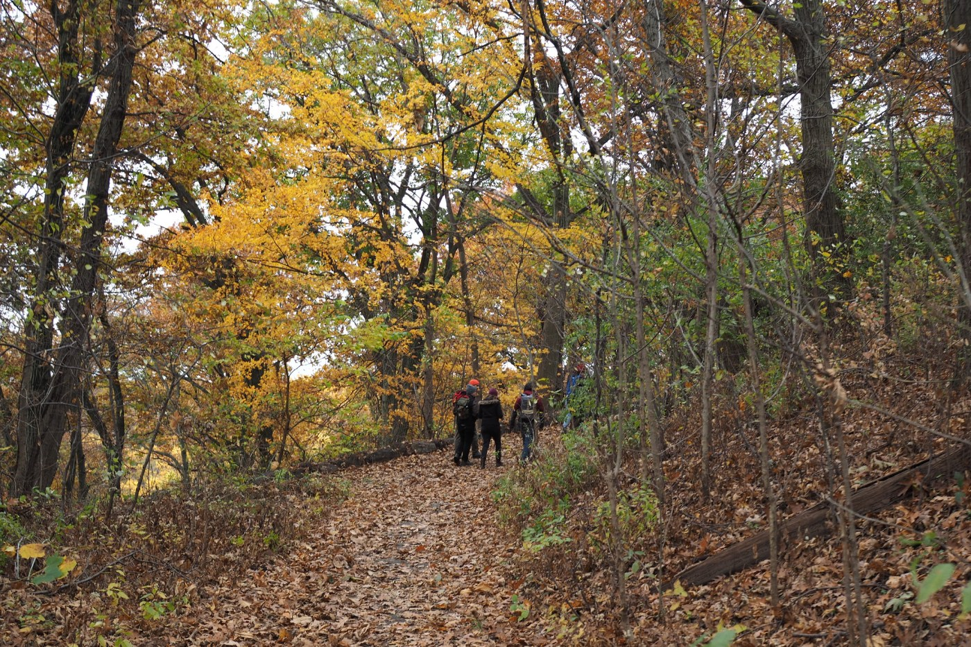 Hiking up the paved trail at Inwood Hill Park in the Bronx