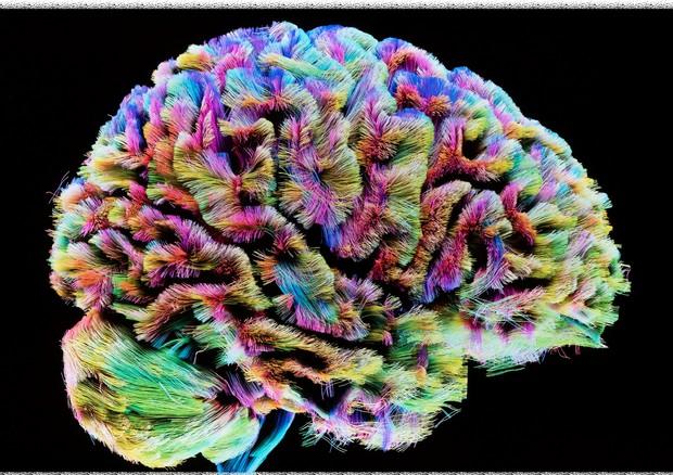 La Bellezza del cervello secondo Carla Vittoria Maira