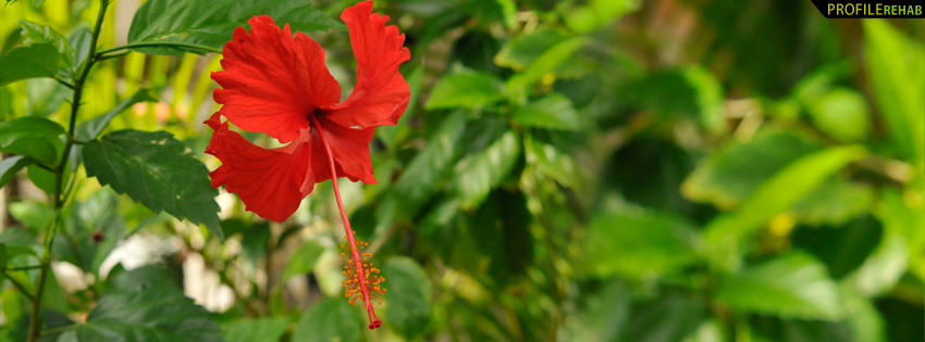 Fall Flowers Wallpaper Backgrounds Red Hibiscus Facebook Cover