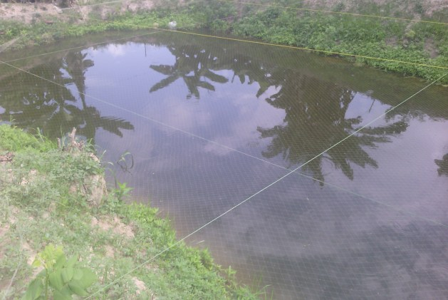 Net your pond