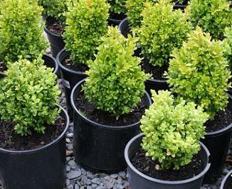 make money growing landscaping