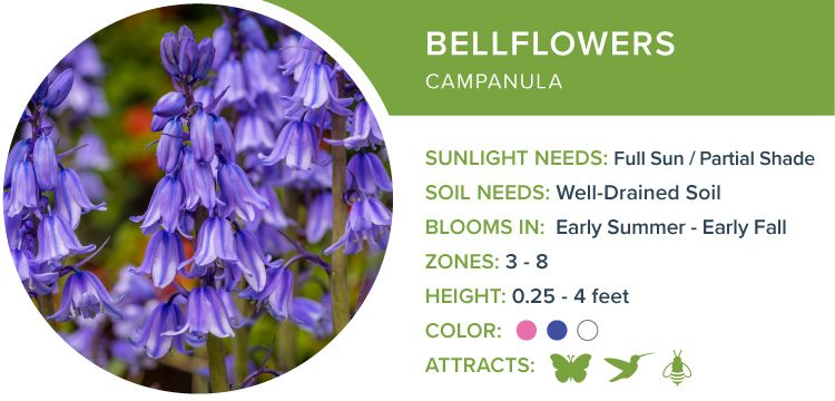 bellflowers best perennial flowers for shade