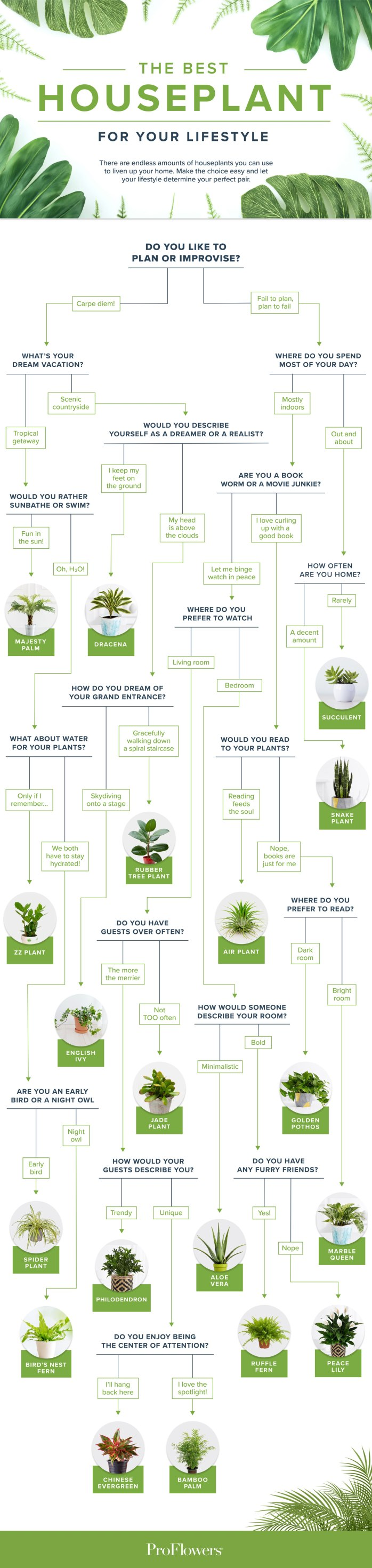 best houseplant for your lifestyle flowchart