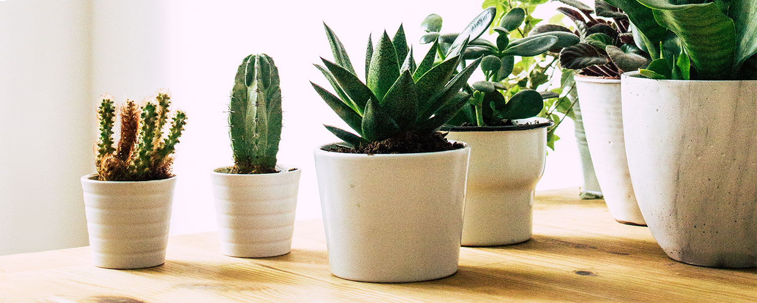 21 Small Indoor Plants For Apartment Living Proflowers