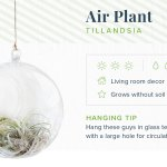 16 Indoor Hanging Plants To Decorate Your Home Proflowers