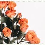 72 Quotes About Roses Life Love And Thorns Proflowers Blog