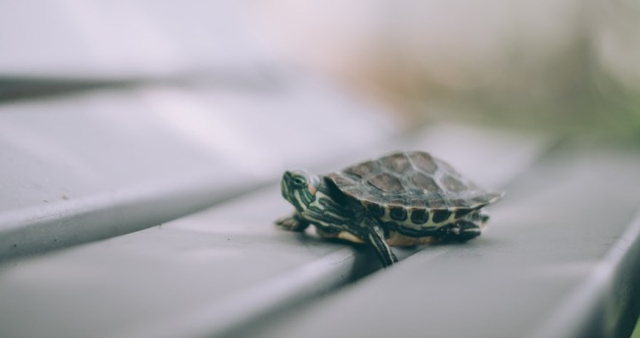 Reasons why your website is running slow